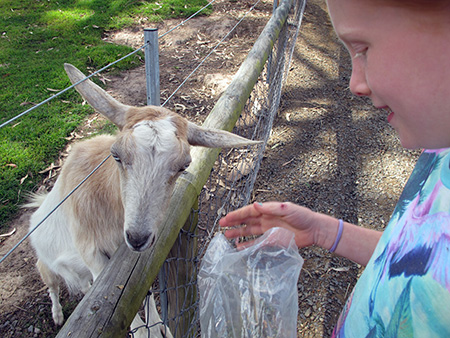 Ecopark Animal Encounter
