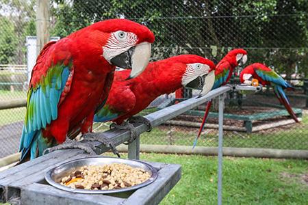 EcoPark Birds